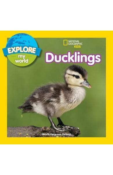 Explore My World: Ducklings - Marfe Ferguson Delano