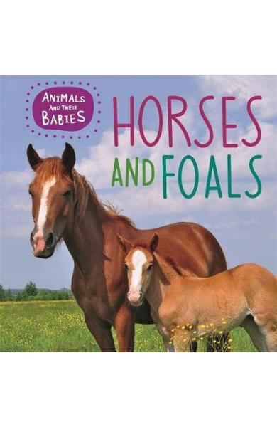 Animals and their Babies: Horses & foals