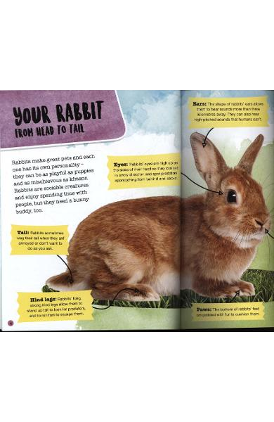 Pet Pals: Rabbit